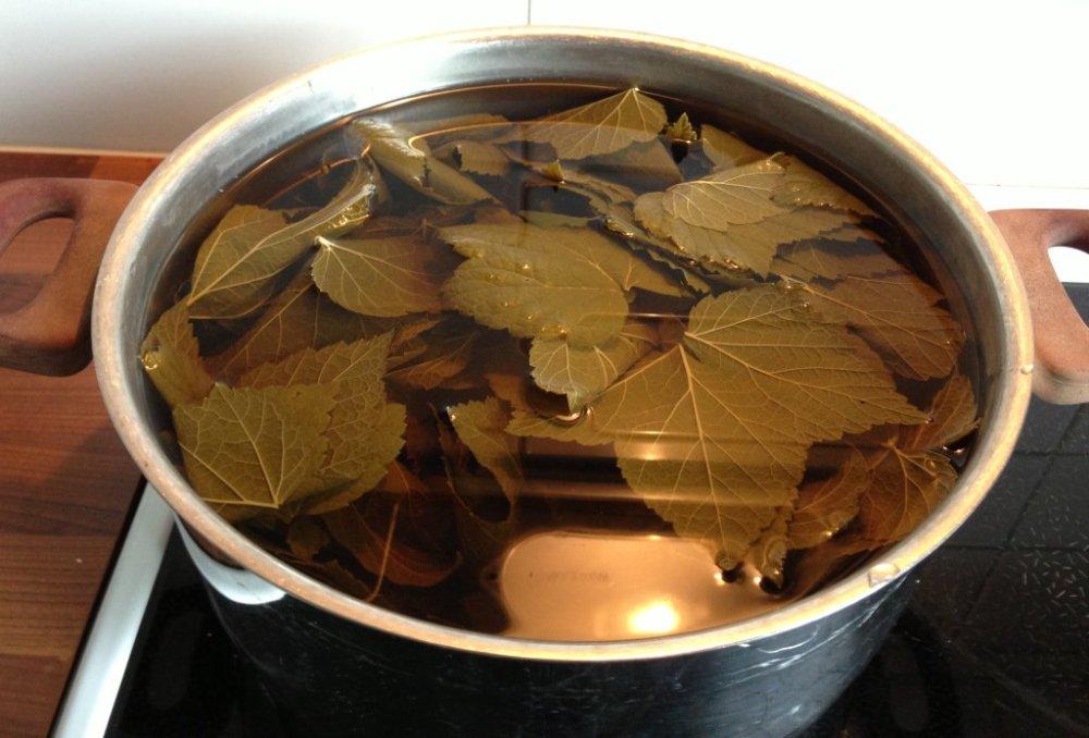 Blackcurrant leaf juice (3/6)
